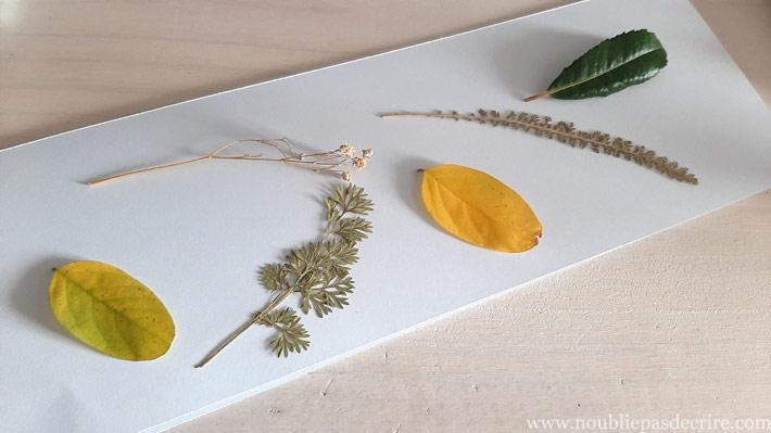 Disposez les plantes avant teinture