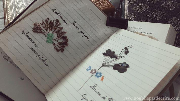 Commencer un herbier, écrit à la main