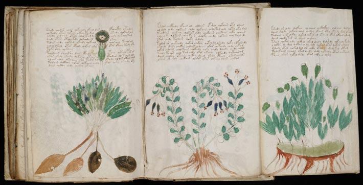 Le manuscrit de Voynich, planches botaniques